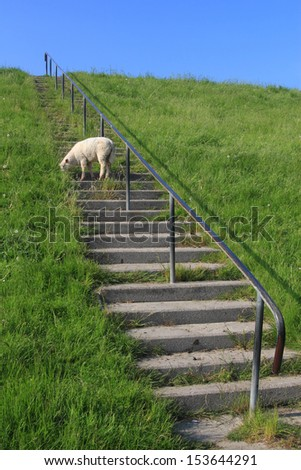 lamb grazing on a levee - stock photo