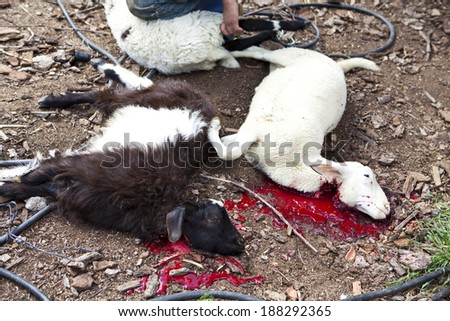 Lamb killing during the preparation for Greek Easter
