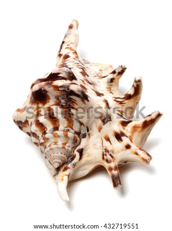 Lambis tiger shell isolated on white background. Close-up view.