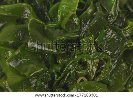 Laminaria (Kelp) Seaweed Isolated on White Background  - stock photo