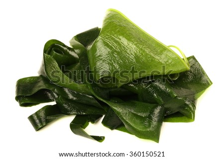 Laminaria (Kelp) Seaweed Isolated on White Background - stock photo