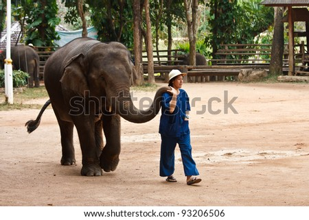 LAMPANG, THAILAND - DEC. 12: Daily elephant show at The Thai Elephant Conservation Center (TECC), female mahout takes elephant walk around to show for tourists, December 12, 2011 in Lampang, Thailand.
