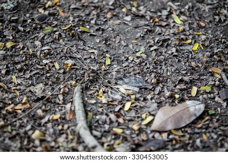 Land in forest close up background. - stock photo