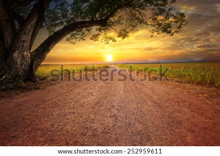 land scape of dusty road in rural scene and big rain tree plant against beautiful sunset sky use for natural background - stock photo