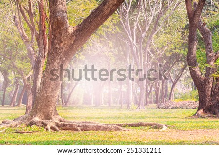 land scpae of green tree in public park with flare light background use as nature background - stock photo