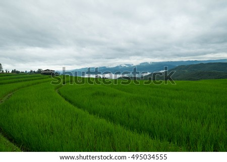 Land scrape rice fields with fog on the mountain.