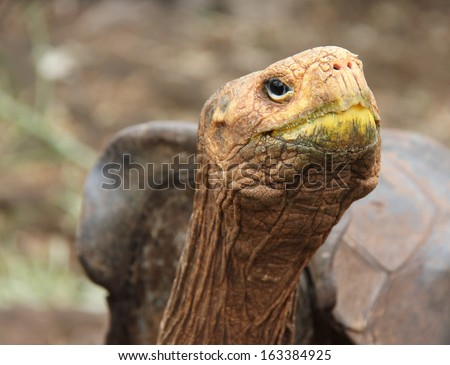Land tortoise  at the Charles Darwin Research Station  on Santa Cruz Island, Galapagos, Ecuador.