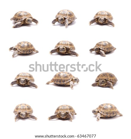 land tortoise, sand a little on a white background - stock photo