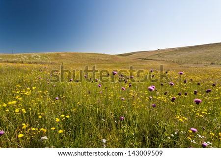 Landscape 2 - stock photo