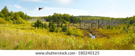 Landscape. A beautiful marsh, surrounded by trees, with an eagle , and raven in flight, and a beaver swimming in the creek. Wide angle image.  - stock photo