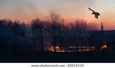 Landscape. A raven soars above an annual grass burning on a native Indian reserve on Manitoulin Island, Canada after sunset with a silhouetted man standing by with a hose.