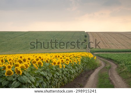 Landscape - agricultural land with sunflowers, potatoes, corn, wheat and road - stock photo