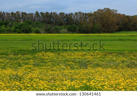 Landscape and yellow mayflowers