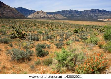 Landscape at Red Rock Canyon, Nevada, USA - stock photo