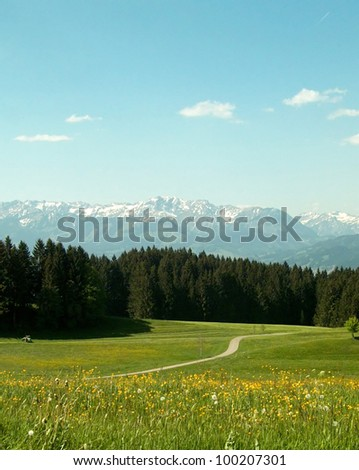 Landscape at springtime Springflowers in a Field - stock photo