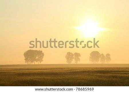 Landscape at sunrise over a field of grain. - stock photo