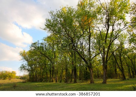 Landscape. At the edge of the deciduous forest