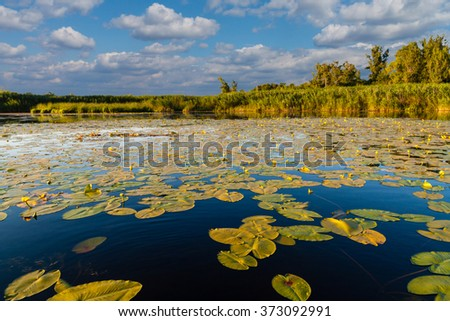 Landscape at the lake with water lilies in summer sunny day with white clouds - stock photo