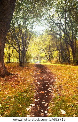 Landscape. Autumn wood