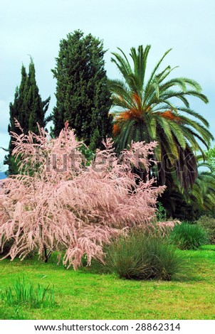 landscape canary islands in a botanical garden of barcelona, spain, catalonia - stock photo