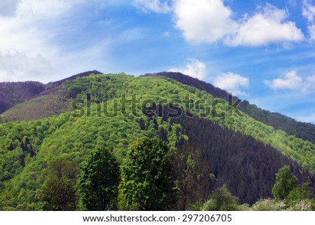 landscape consisting of a Carpathian big mountain with green trees and fir-tree on a foreground and blue sky with white clouds on the background  - stock photo