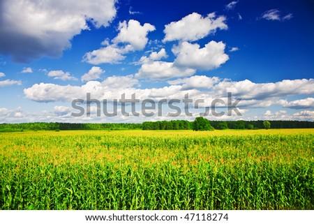 landscape - corn field - stock photo