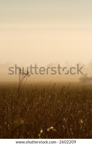 Landscape covered in mist