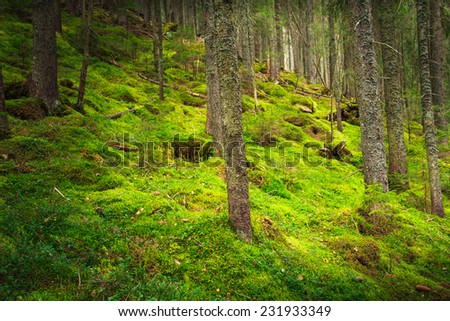 Landscape dense mountain forest and stone path between the roots of trees. Filtered image: colorful effect.