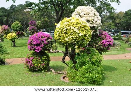 Landscape design. Round shape. Bougainvillea. Trees cut in the form of balls in garden. - stock photo