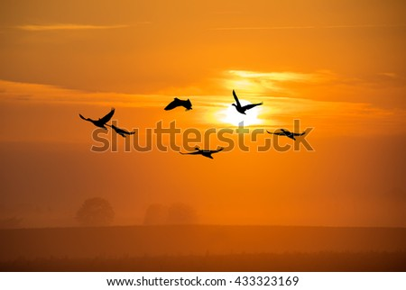 Landscape during bright sunset with flying birds  - stock photo