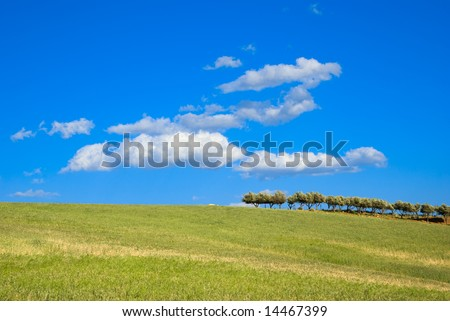 landscape for a cultivation with row of trees - stock photo