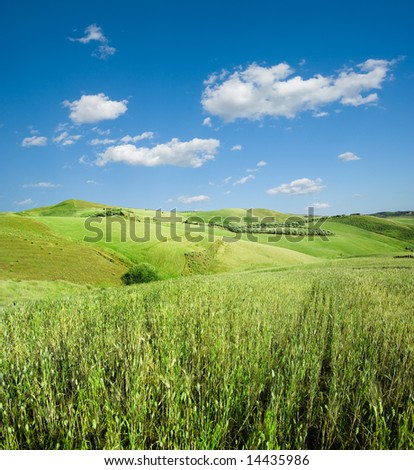 landscape for green hill of wheat and white clouds in the blue sky
