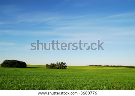 Landscape, green field with trees , blue sky and white fluffy clouds. - stock photo