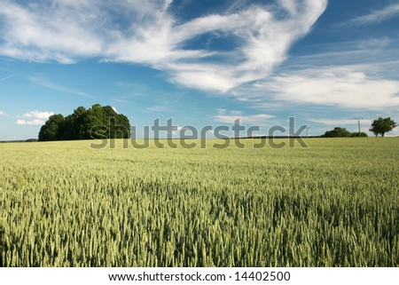 Landscape - green filed and the blue sky - stock photo