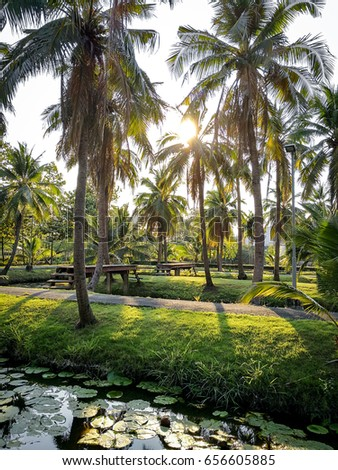 Landscape green park with palm tree or coconut tree and lotus pond.