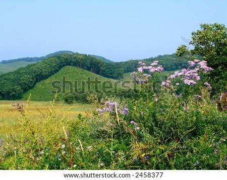 landscape: hills, meadow, chamomiles - stock photo