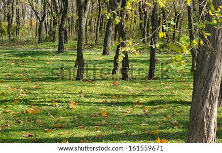 Landscape image of a forest during fall with green grass and fallen leafs - stock photo