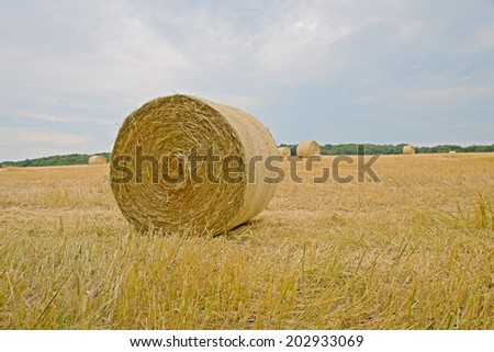 Landscape image of fresh hale bales in a recently cut field of wheat