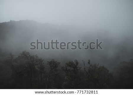 Landscape image of greenery rainforest in foggy day