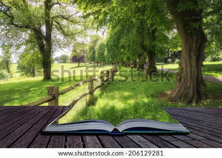 Landscape image of vibrant lush green forest woodland scene Creative concept  - stock photo