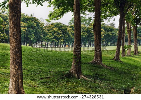 Landscape   in a park with trees  and  lawn in city of bangkok - stock photo