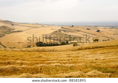 Landscape in Basilicata (Italy) near Forenza at summer