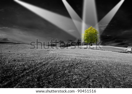 Landscape in black and white with green tree - the concept of ecology - stock photo