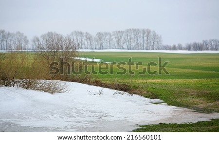 landscape in early spring in the fields of new green grass under the melted snow on a cloudy day - stock photo