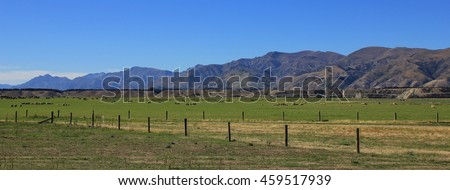 Landscape in Otago, New Zealand. Green meadow with sheep. Mountains. Summer scene on the South Island.