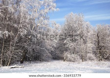 landscape in snow against blue sky. Winter scene. - stock photo
