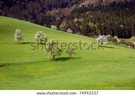 Landscape in the Black-forest, Germany ,Glottertal - stock photo