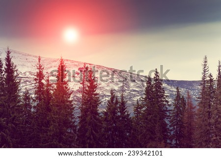 Landscape in the mountain:snowy tops and green trees. Fantastic evening glowing by sunlight. Retro filter. Filtered image: instagram toning effect. - stock photo