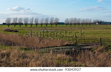 Landscape in the Netherlands with a row of pollard willows, an old and rusty fence, reed and  puddles on the field. - stock photo