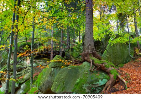 landscape in the woods with rocks and trees